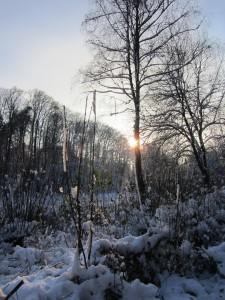 Winter IMG_0314